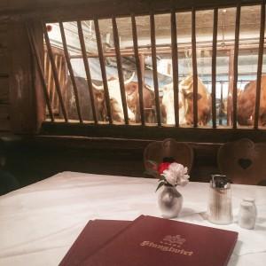 Der Stanglwirt B. Hauser wollte Tiroler Bergbauer bleiben. In das Restaurant hat er Glasscheiben eingebaut - die Gäste speisen nun fast direkt im Kuhstall. (Foto: Winderl)