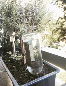 Wasserspeicher-DIY.JPG