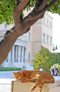 Wie diese vor der dem Parlament chillende Katze, habe ich mich in Athen sehr wohlgefühlt. #catcontent geht im www doch immer - auch wenn es gleichzeitig etwas traurig ist, da es sehr viele streunende Katzen und Hunde dort zu geben scheint (Foto: Winderl)