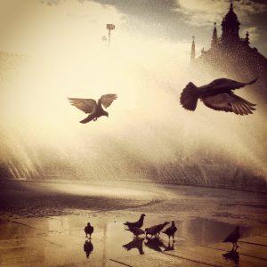 Wo ist München am Italienischsten? So lautet unsere Gewinnspielfrage. Ein Beispiel-Schnappschuss sind die Tauben am Stachus. Sieht das nicht aus wie in Venedig? (Foto: Winderl)